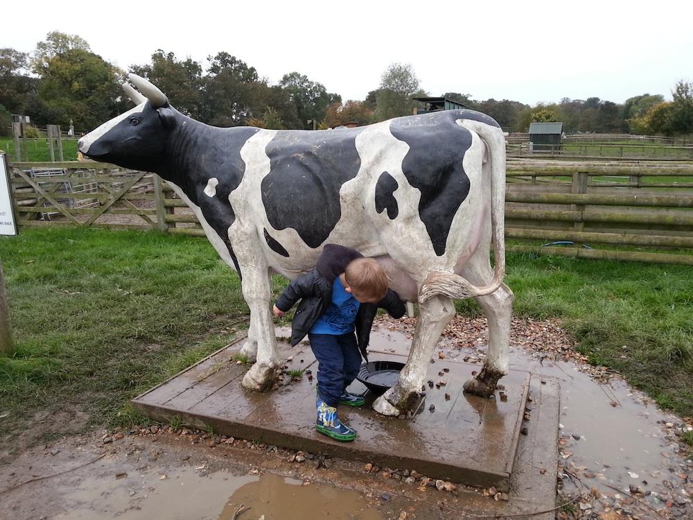 willows farm milking cow