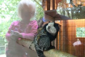 Amazona Zoo 47